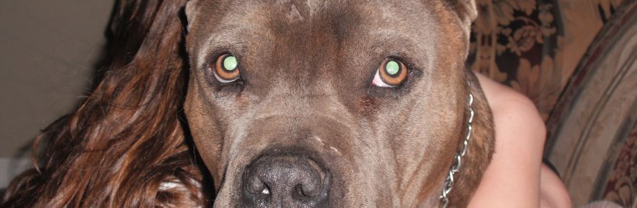 American Pit Bull Terrier (APBT) Cover Image