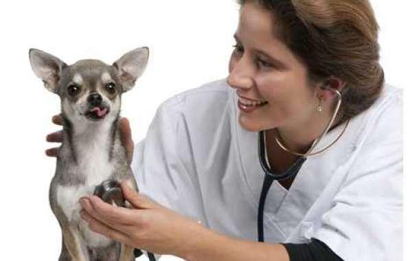 Top Three Factors in Choosing The Best Veterinarian